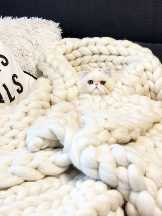 tricot gigante gatinho