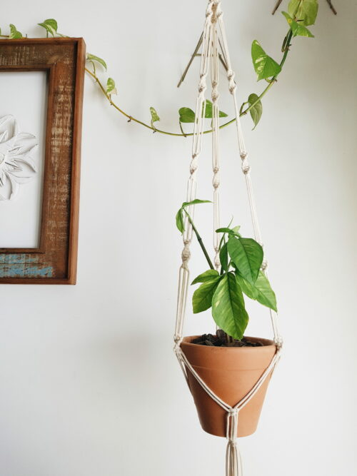 Hanger Vaso Macramê Orquídea