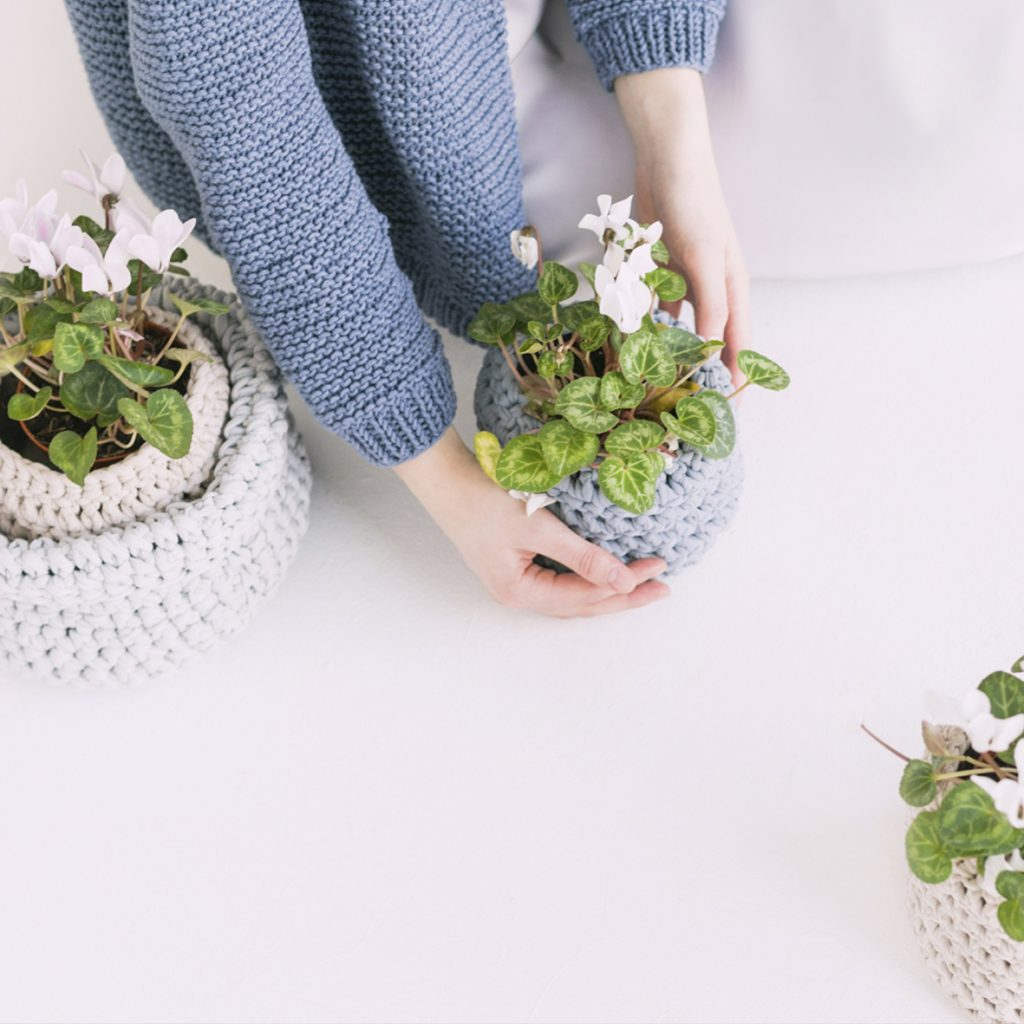 Suas plantinhas