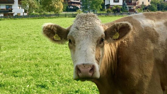 15 motivos para você diminuir o consumo de carne e ajudar nas mudanças climáticas
